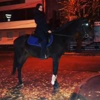 Продам лошадь коня