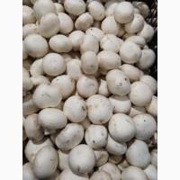 Продажа свежих грибов II сорта и открытого