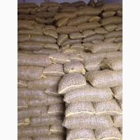 Продаем орех грецкий в скорлупе оптом Калибр 28+; 30