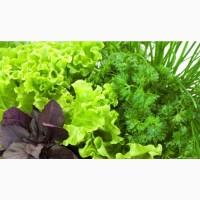 Зелень и овощи оптом от производителя без посредников укроп петрушка базилик редис перец