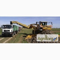 Набираємо зерновози на уборку пізніх зернових