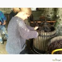 Куплю виноград технических сортов
