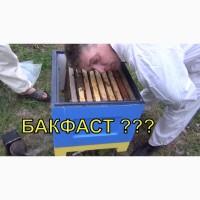 Продам пчелопакеты отводки Бакфаст