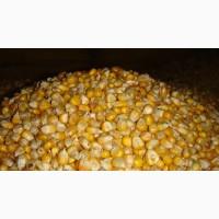 Дорого, кукуруза любого качества (возможно влажную)
