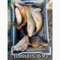 Продажа живой рыбы с пруда