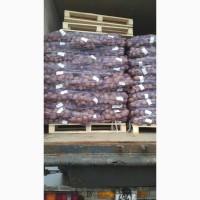 Продам картофель посадчный.Галла_40 тонн.7.80 грн с места.Реальный продавец