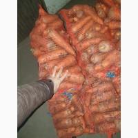 Морковь крупная Абако и Болевар крупным и мелким оптом со склада в Харькове