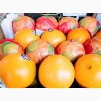 Компания импортёр продаёт апельсин оптом