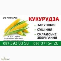 Продам кукурузу за безнальный расчет в количестве 500 тонн