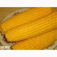 Закупаем кукурузу(Фуражную).Самовывоз