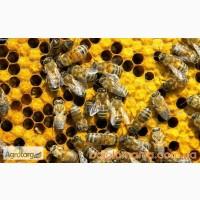 Продам бджолосім#039;ї з вуликами, дещево