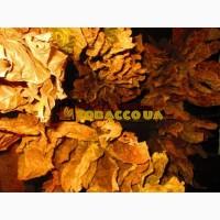 Продам семена табака и махорки - Внимание!!! Акция! 2000 семян 30 грн