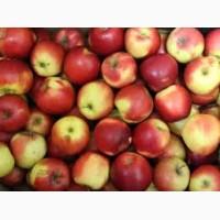 Яблоки недорого