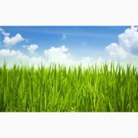 Насіння кормових трав, газонні трави, медоноси та сидерати завжди в наявності