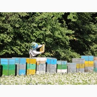 Продам бджоли
