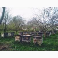 Продам бджоли, бджолпкети, бджолосім#039;ї, вулики