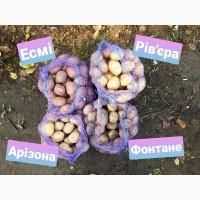 Картопля Арізона, Есмі, Фонтане, Рів#039;єра