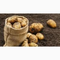 Продам картофель оптом от производителя. Есть объем. Нал/безнал
