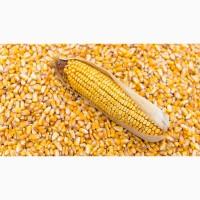 Купуемо зерно Кукурузы будьякий регiон, вiд виробника