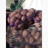 Продам товарный, бюджетный и посадочный картофель