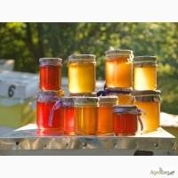 Очень вкусный ЭКО мед, липа+полевые цветы