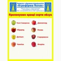 Яблоки по доступным ценам