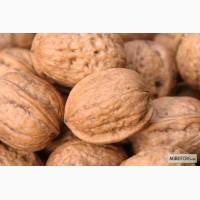 Заготавливаем грецкий орех кругляк любой обьем хорошее качество