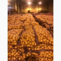 Свежий картофель: Бриз, Манифест, Джелли, Пароли, Королева Анна, Лаперла, Белароза