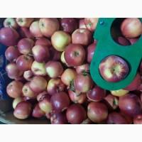 Продам яблка Гала