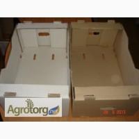 Ящик, Лоток, Евротара для помидоров