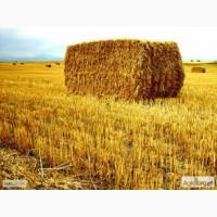 Продам солому пшениці в тюках, 20 кг/шт