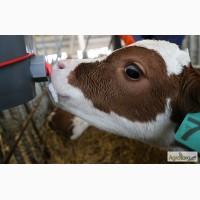 Замінник молока Телятко.UA (з 15 дня, 70% молочної основи)