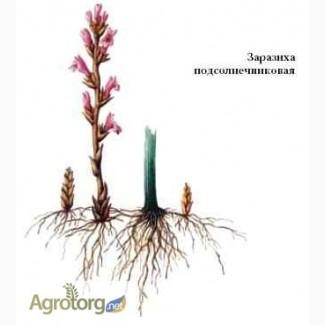 Семена под заразиху, Атилла, Тунка, 5580, Белла, Петуния по выгодной цене