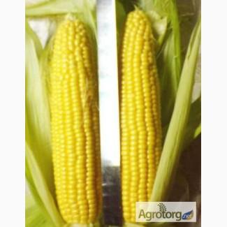 Крупно-оптовая закупка кукурузы