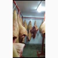 Свежее мясо свинины в тушах