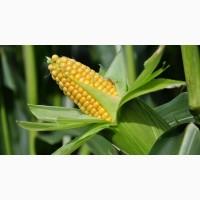 Продам жмых кукурузы зародыша
