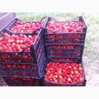 Продаємо полуницю мармелада