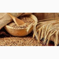 Куплю пшеницу в ассортименте, ячмень, сою. Днепр