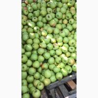 Продам яблоко из сада сорта Чемпион, Голден, Айдаред, Запорожская обл