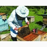 Продам бджолопакети (пчелопакеты) бджіл терміново