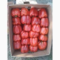 Продам красный перец Геркулес