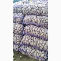 Продам товарный картофель разных сортов из Белоруссии