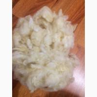 Продам мытую овечью шерсть