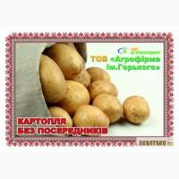 Качественный картофель от с/х производителя