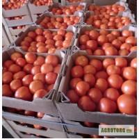 Продам томаты тепличные сорт Атлет, сорт Лилос.