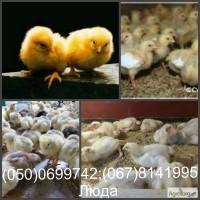 Продам бройлера, цыплят, утят опт и розница