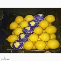 Оптовая продажа лимона прямо с Турции