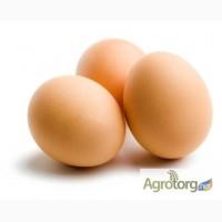 Куплю яйца куриные