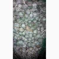 Продам мелкий чеснок диаметром от 2 до 4 см на переработку