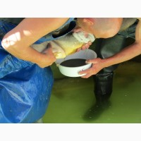 Аквакультура нв внутрішніх водних обєктах